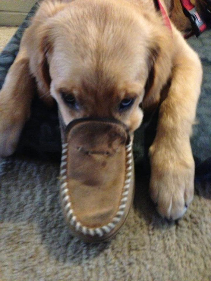 Some Dogs Are Known To Disguise Themselves As Platypuses, Usually For Tax Reasons