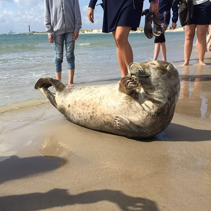 Of All Sunbathing Species, On Average Seals Have The Highest Levels Of Self-Confidence