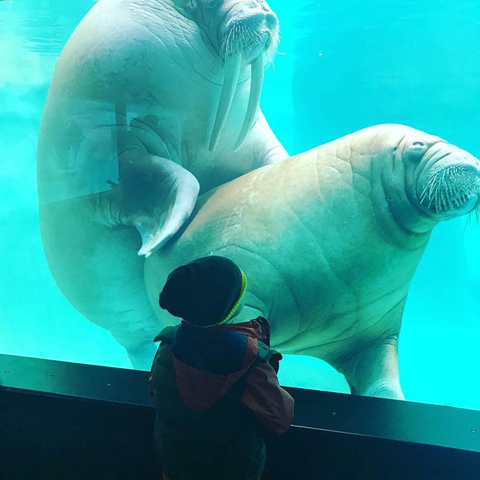 My Nephew Went To The Zoo And Learned That Walruses Like Hugs Too ... Just Like People.