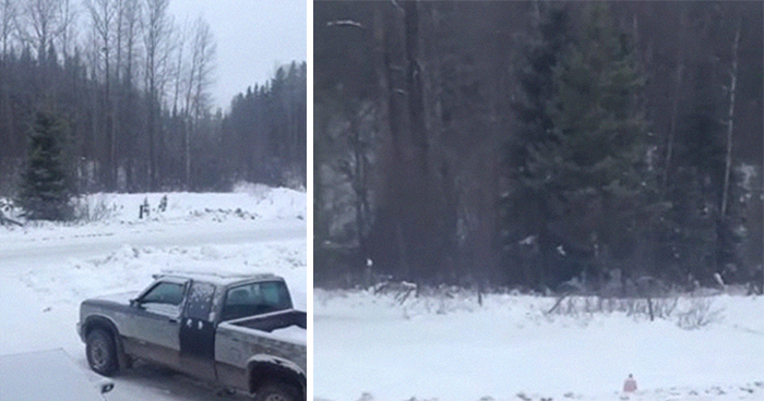 Man Documents A Strange Noise Coming From Outside The Forest, Asks What The Hell It Is