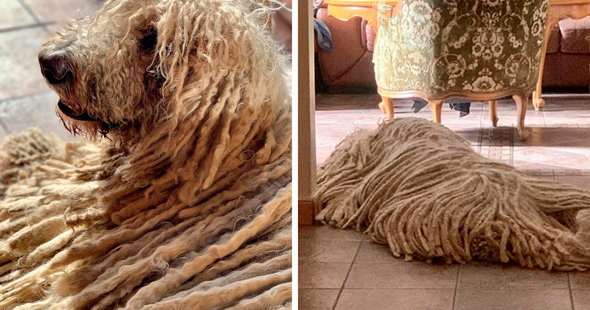 This Mop Dog Is Going Viral, And People Are Stopping Just To Take A Picture With Her