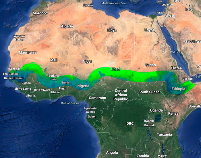 "Over 20 Countries Started Building The ""Great Green Wall"" To Stop Climate Change & Poverty"