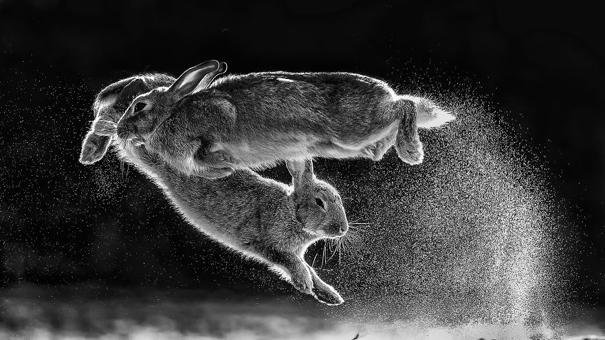 Overall Winner And Black And White Category Winner: 'Jump' By Csaba Daroczi (Hungary)