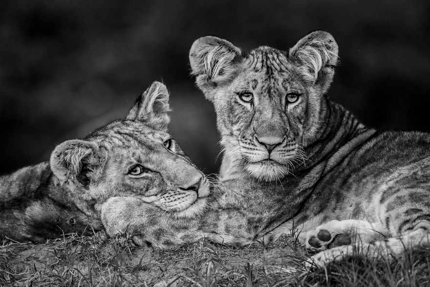 Category Black And White Highly Commended: 'Brothers' By Luke Massey (Es)