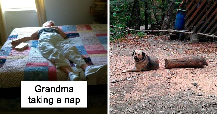 64 Times Innocent Things Almost Gave People A Heart Attack