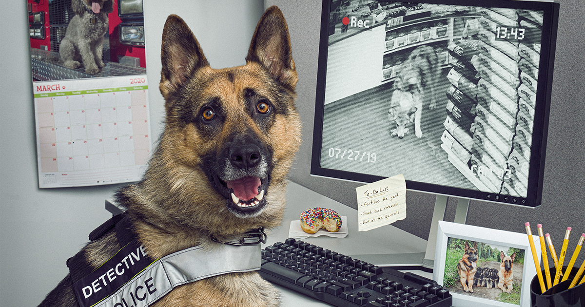 I Was Asked To Create A Kickass Calendar For Waterloo Police, And Here Is The Result (14 Pics)
