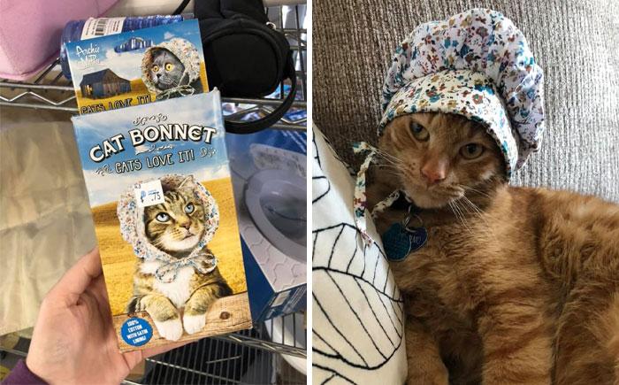 My Cat Did Not Love It