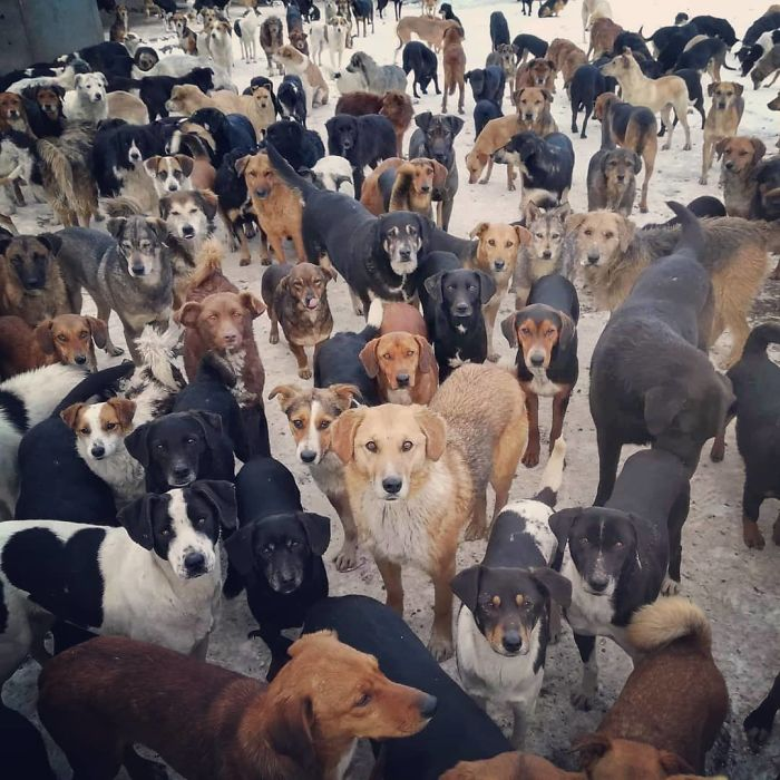 Guy Takes In Pups That No One Wants, Runs A Shelter With 750 Dogs