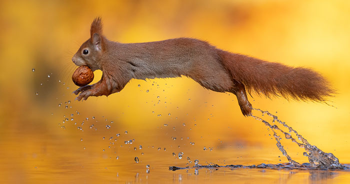 Photographer Waits Hours To Capture The Autumn Idyll Of Squirrels Carrying A Nut Over A Lake (8 Pics)