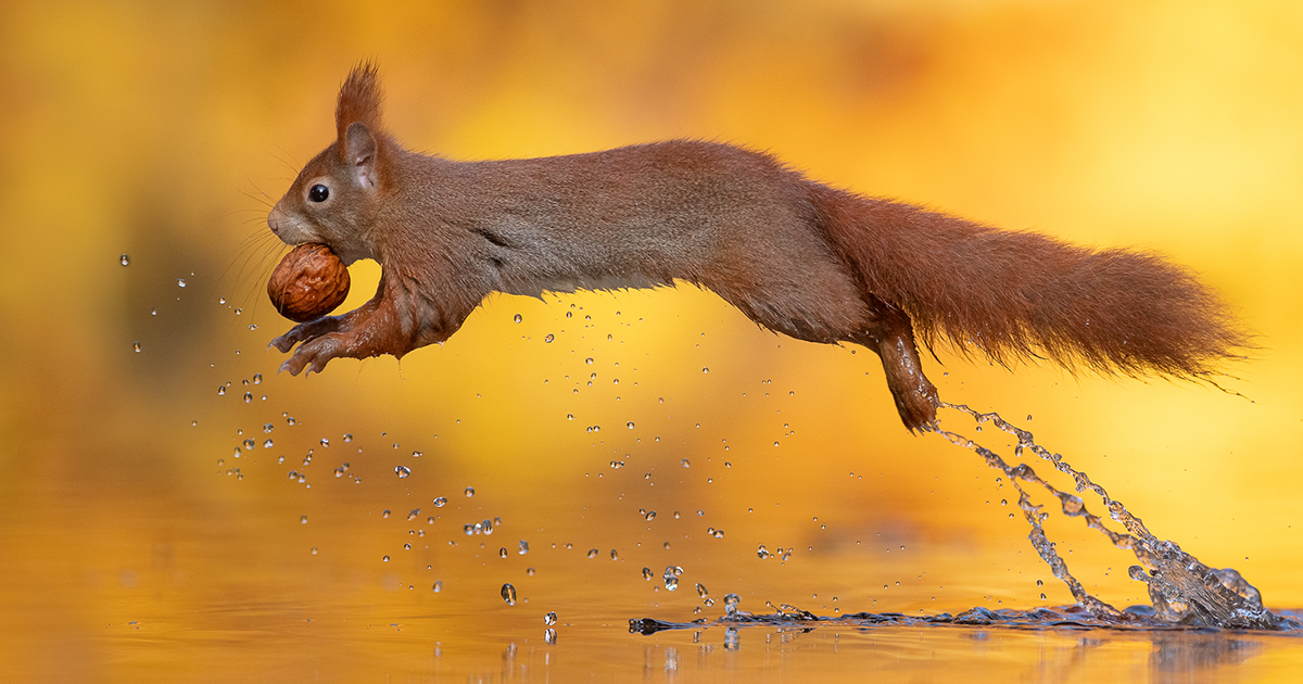 Dutch Photographer Captures 'Very Photogenic' Squirrels