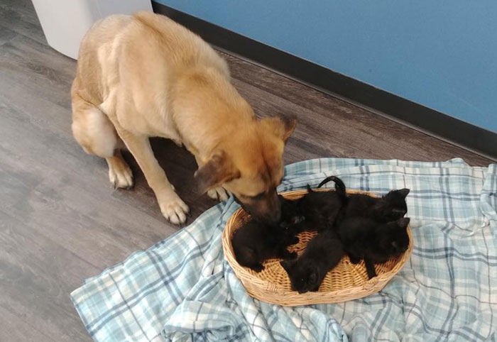 This Stray Dog Was Found Carrying Abandoned Kittens Off The Side Of The Road