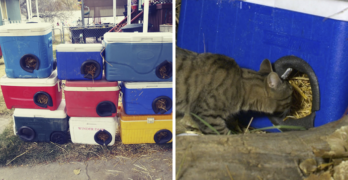 Man Makes Winter Shelters For Stray Cats Out Of Discarded Coolers