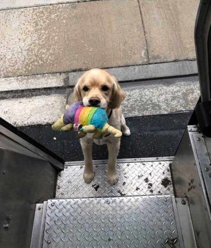 Turns Out, UPS Drivers Have A Facebook Group About Dogs They Meet On Their Routes, And It Will Make Your Day (New Pics)