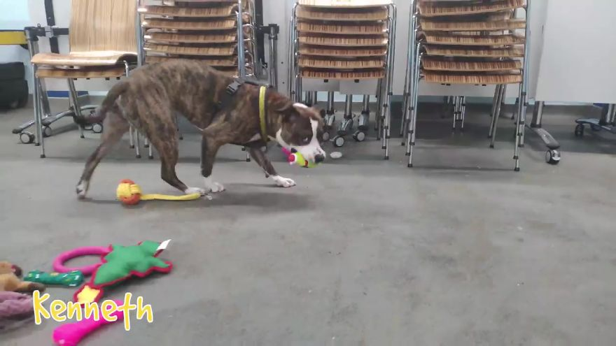 35 Dogs Were Allowed To Pick Their Own Christmas Gifts At Animal Shelter, And Here's What Happened