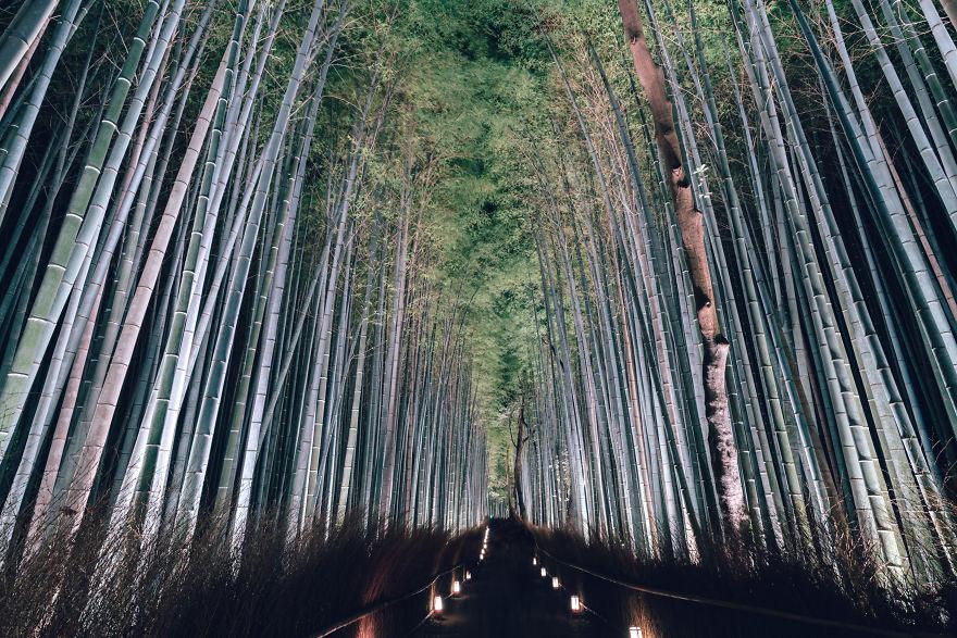 The Bamboo Grove,arashiyama Is One