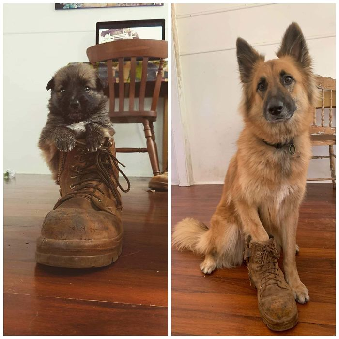 Same Boot, 3 Years Later