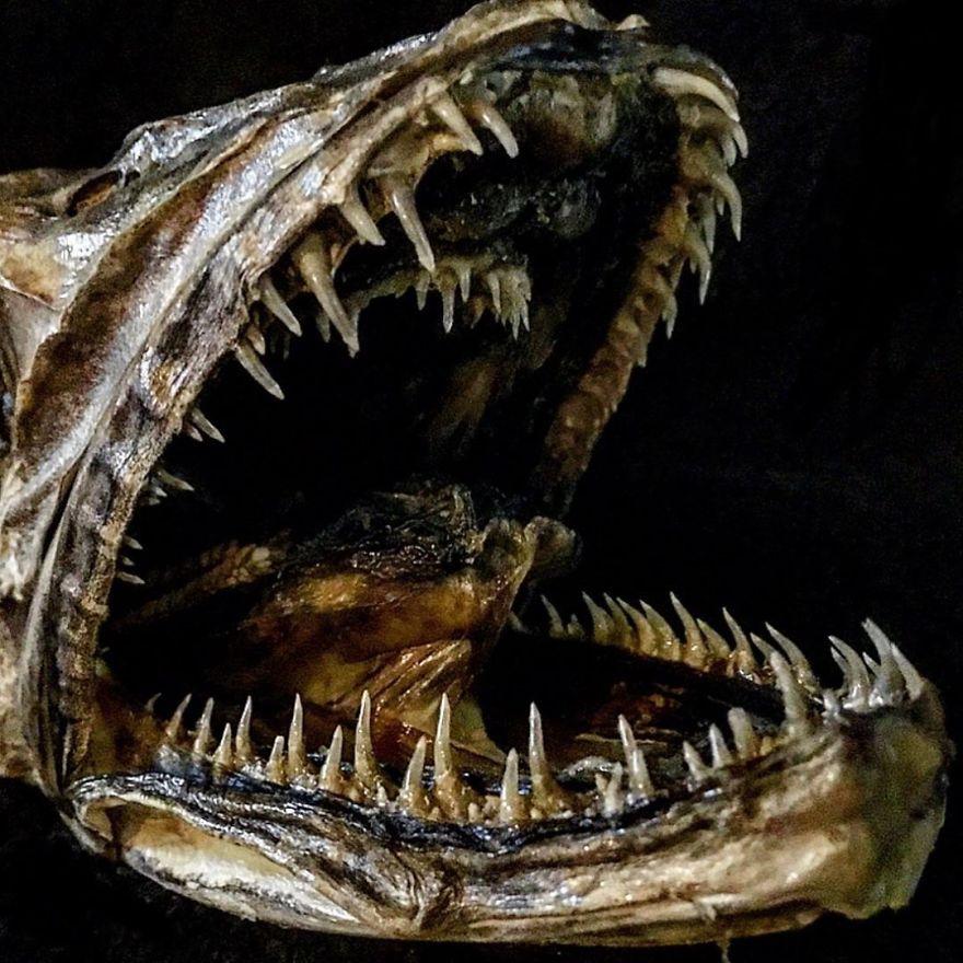 The Nasty Teeth Of A Hake Fish