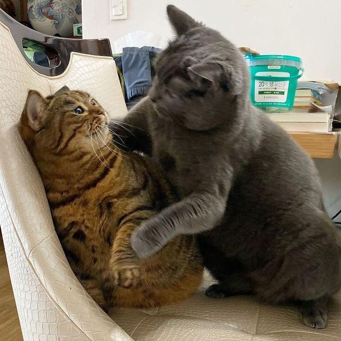 Manggo Cat Expressions