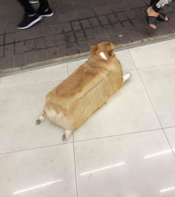 Miloaf Of Bread