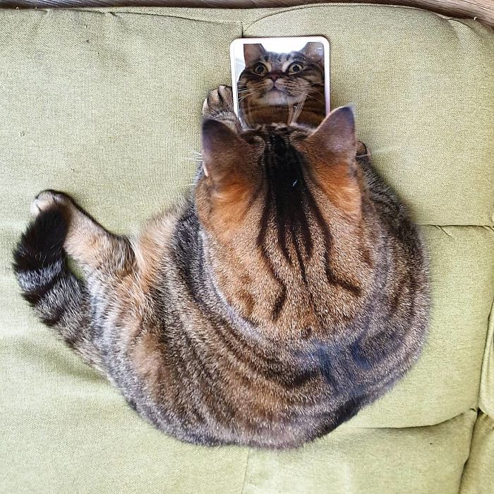 This Chunky Cat Named Manggo Will Steal Your Heart With Her Hilarious Expressions