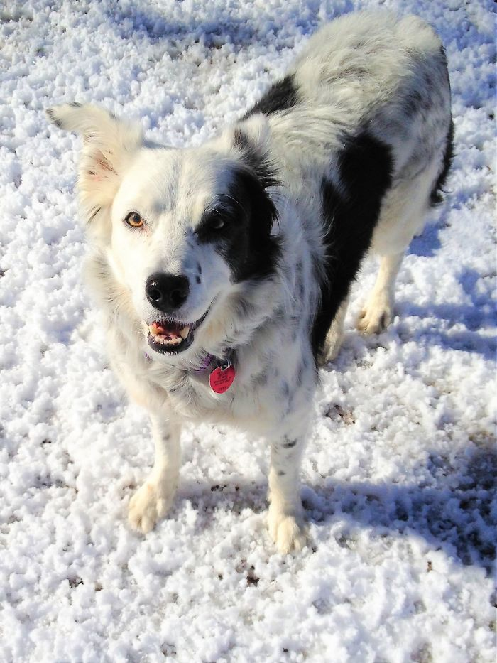 Chaser The Border Collie Had The Largest Tested Memory Of Any Non-Human Animal