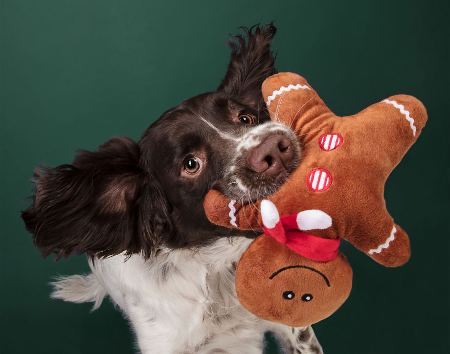 I Celebrated Christmas In My Photography Studio With Some Festive Dogs