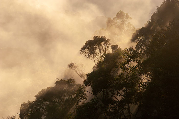 Golden Mist In The Cloud Forests