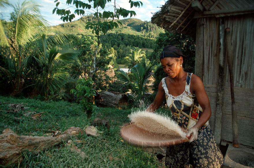 Woman Is Preparing The Meal With Rice