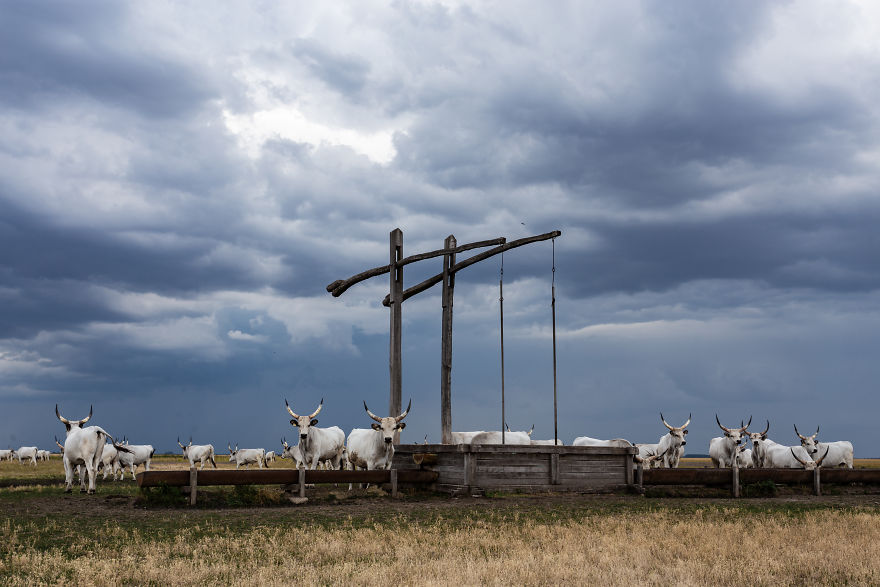 The Life Of The Traditional Shepherds Of Rural Hungary - Guardians Of The Past