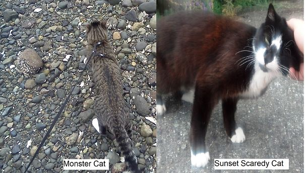 Monster-Sunset-5df8e7e109776.jpg