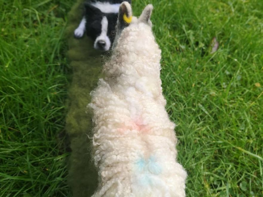 Border Collie And Blue Face Leister Sheep Double Art Piece
