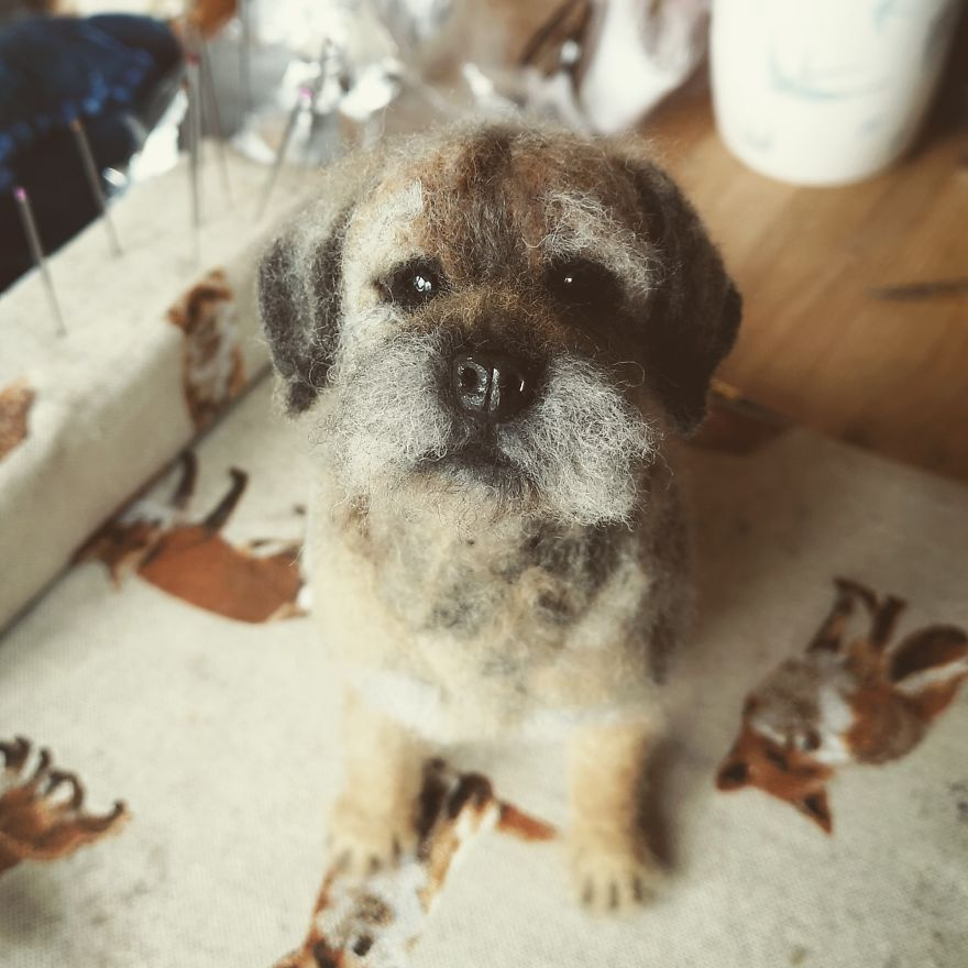 The Making Of My Mini Border Terrier