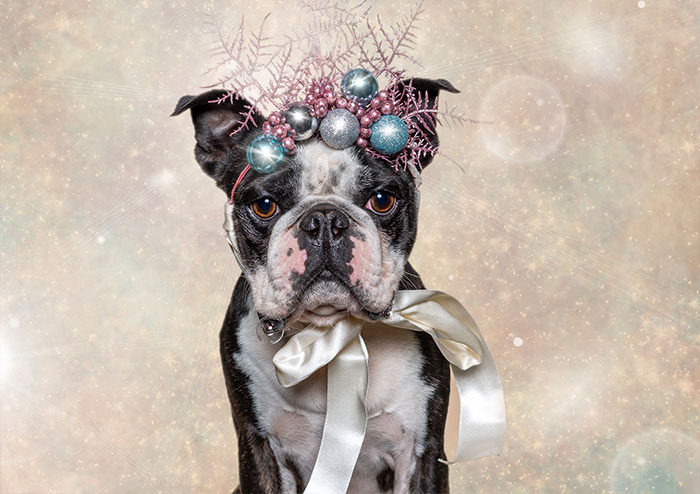 Captured The Expressions Of Animals In The Holiday Spirit (27 Pics)