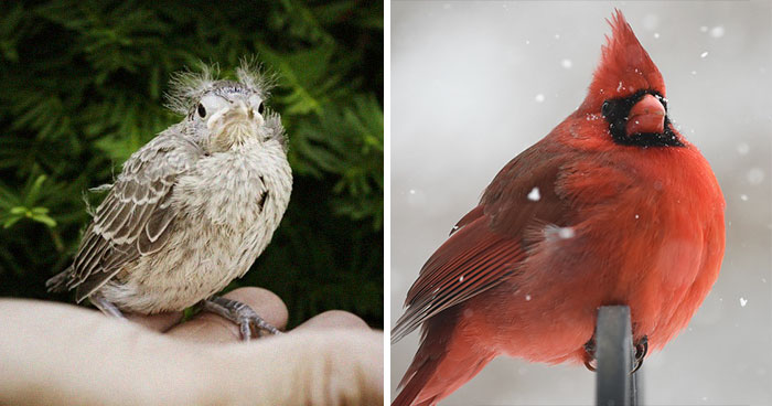 30 Birds When They're Babies Versus All Grown Up