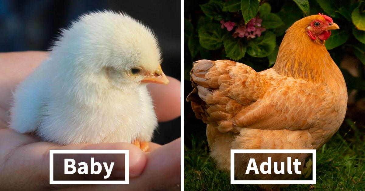 30 Birds When They're Babies Versus All Grown Up