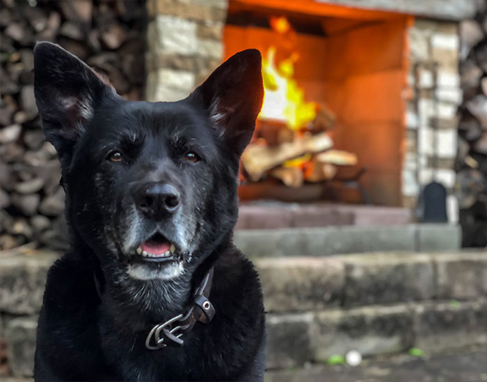 Firefighter Shares A Tribute To His Dog That Passed Away And Every Pet Owner Can Relate