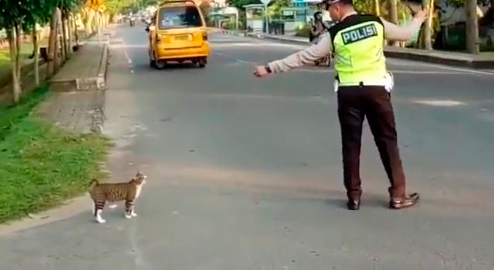 Indonesian Police Officer Goes Viral For Helping A Cat Cross The Road