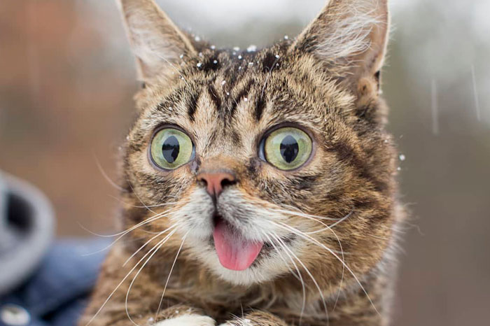 The Owner Of An Internet-Famous Cat Lil Bub Shares A Heartwarming Message To Announce Her Death