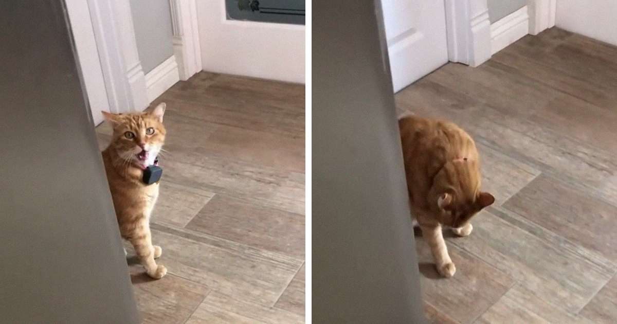 """Someone Records Their Cat Saying """"Well, Hi!"""" In A Southern Accent, And The Clip Goes Viral"""