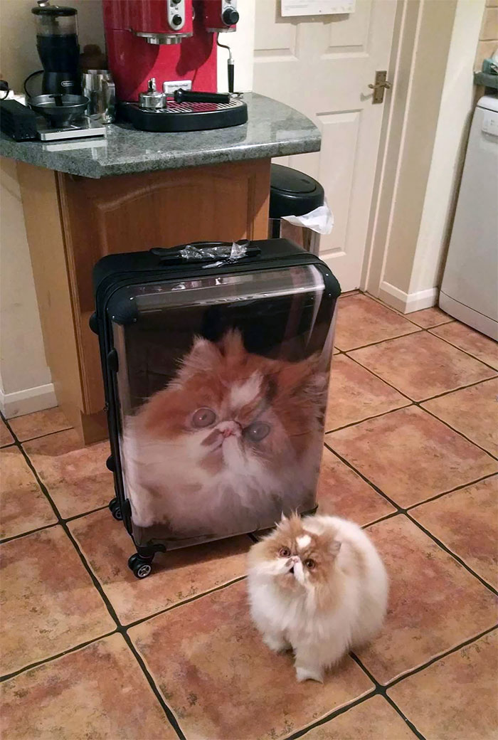 My Girlfriend's Brother Got A New Suitcase For Christmas