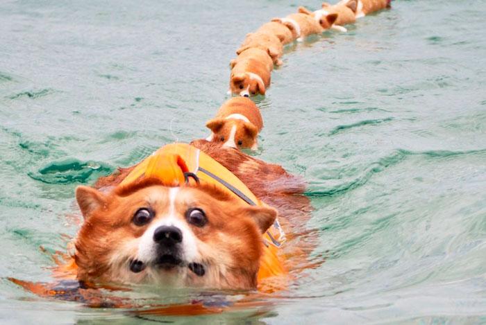 52 Best Photos Of An Adorable Corgi Who Has 50k Instagram Followers