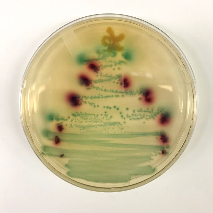 I Made A Bacterial Christmas Tree In The Lab