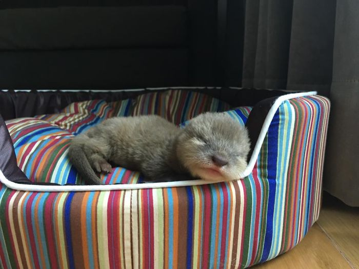 76 Adorable Baby Otter Pics