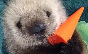 Si estás desanimado, estas 30 fotos de crías de nutria te harán sonreír