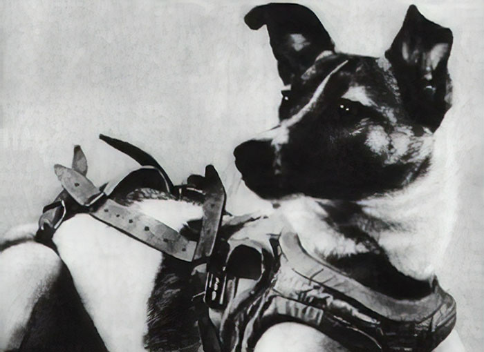 Before Laika Was Launched To Space, One Of The Scientists Took Her Home To Play With His Children