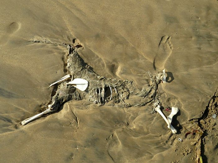 In Bronze Age, Boys Killed Pets To Become Warriors In Early Russia