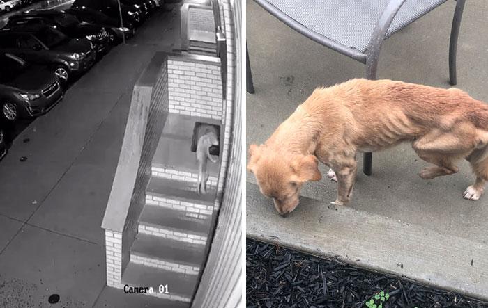 Este hombre dejó sin querer abierta la puerta de su casa y fue «elegido» por un perro callejero que se coló por la noche