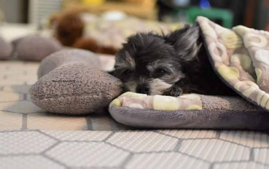 Photos Of Sleeping Pups In A Puppy Daycare Center Are Taking Over The Internet (24 Pics)