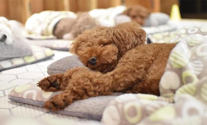 Estas fotos de perritos durmiendo en una guardería canina están conquistando internet (24 fotos)
