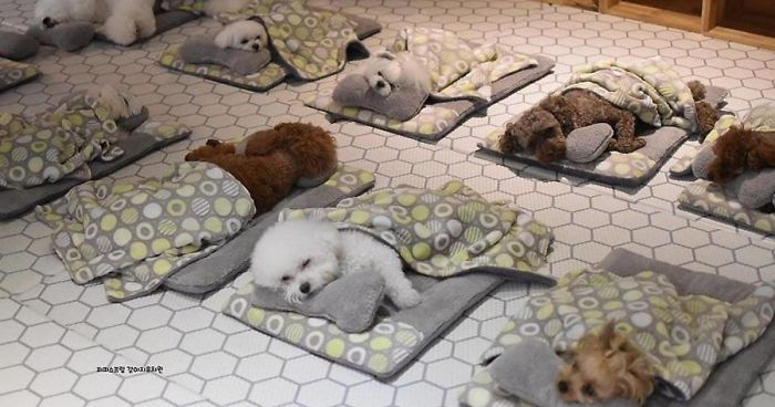 Photos Of Sleeping Pups In A Puppy Daycare Center Are Taking Over The  Internet (24 Pics) | Bored Panda